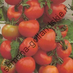 "Томат ""ПАОЛА Ф1"" (Paola F1)  10 семян"